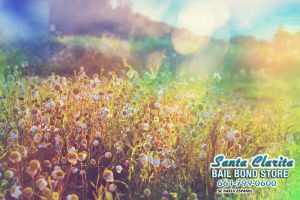 Are You Prepared for the Season to Change? Here Are Somethings to Do This Spring in California