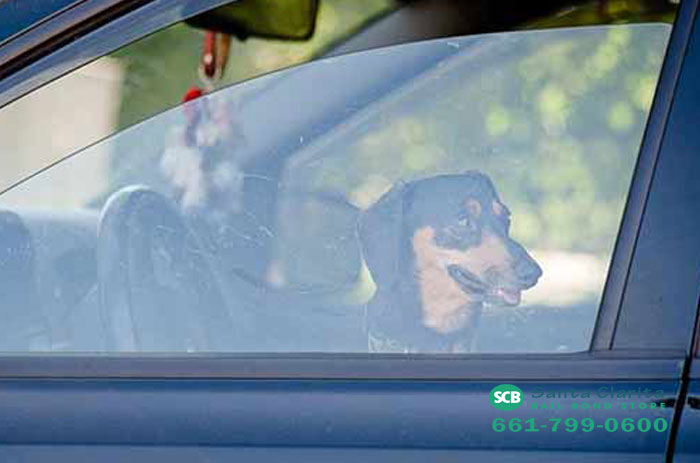 can you leave a dog in cold car santa clarita bail bonds