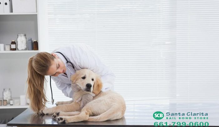 California's Spay and Neuter Laws