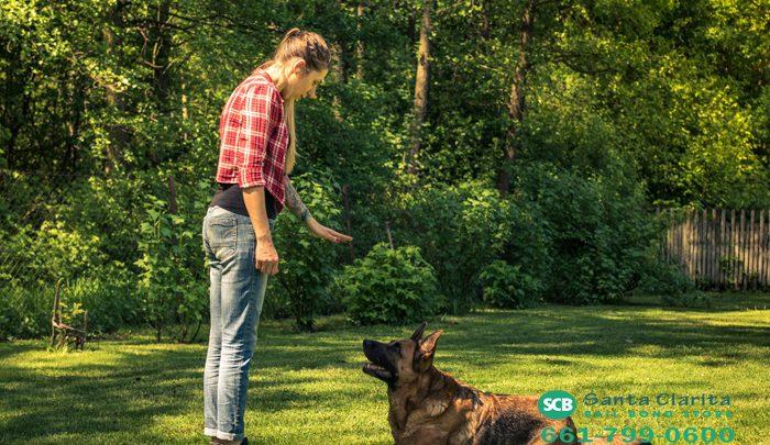 Attack Dog Laws In California
